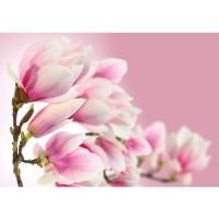 Fototapete Pink Magnolia Blumen Tapete Magnolie Blumenranke Pflanzen Natur Orchidee Blume rosa pink | no. 14