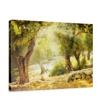 Leinwandbild Wald Sonne Steine Bäume Natur | no. 265
