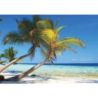 Fototapete Meer Tapete Strand Palmen Meer Paradies Wasser blau grün | no. 1101