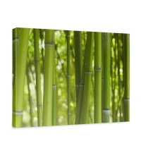 Leinwandbild Dream of Bamboo Bambus Wald Jungle Dschungel Natur Baum Gras | no. 71