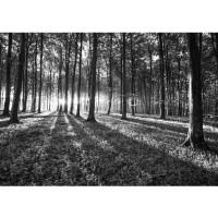 Fototapete Wald Tapete Sonnenuntergang Wald Bäume Wiese grau | no. 642