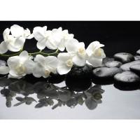 Fototapete White Orchids an Black Stones Ornamente Tapete Orchidee Blumen Blumenranke Rosa Pflanzen schwarz | no. 97