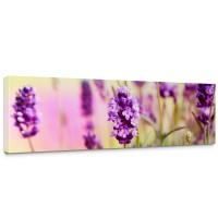 Leinwandbild Blumen Blüten Natur Lila Wiese | no. 197