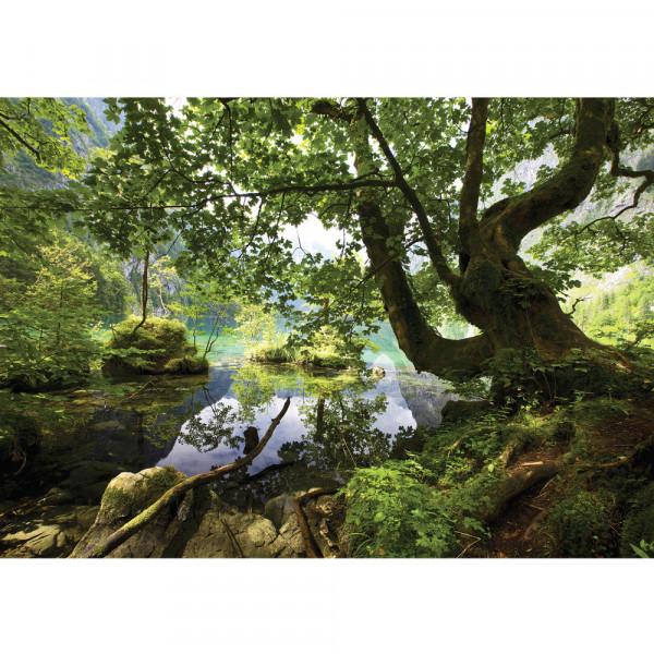 Fototapete Wasser Tapete Baum Gras Berg Felsen Steine grün   no. 2421