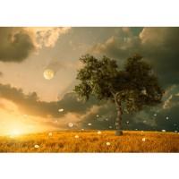 Fototapete Natur Tapete Natur Feld Sonne Mond Baum braun | no. 237