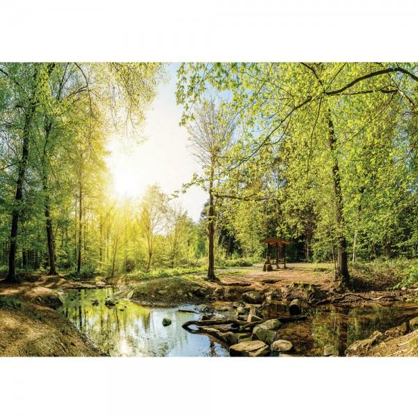 Fototapete Wald Tapete Laubwald, Bach, Steine, Wanderung natural | no. 3350