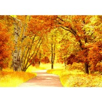 Fototapete Autumn Leaves Wald Tapete Herbstblätter Wald Bäume Baum Forest Herbst braun | no. 79
