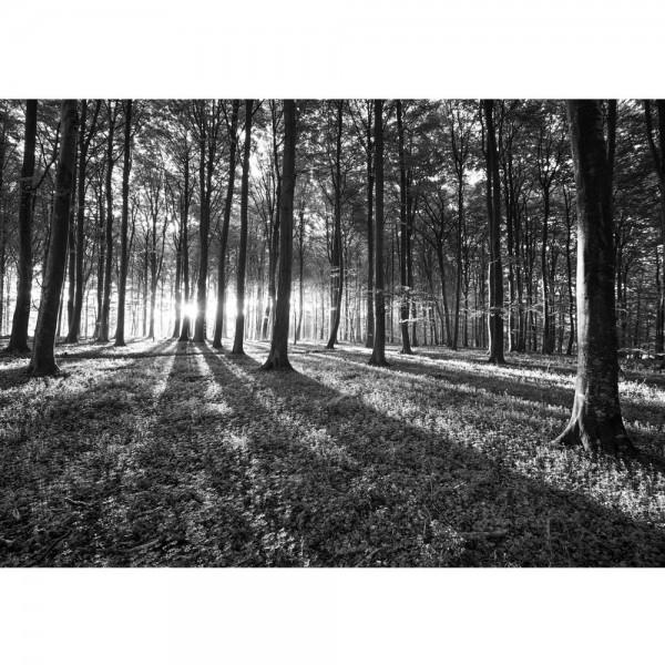 Fototapete Wald Tapete Sonnenuntergang Wald Bäume Wiese grau   no. 642