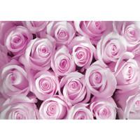 Fototapete Blumen Tapete Rosen Blumen Blüten Pflanze rosa | no. 363