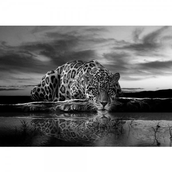 Fototapete Tiere Tapete Jaguar Sonnenuntergang Himmel Wasser schwarz - weiß   no. 614