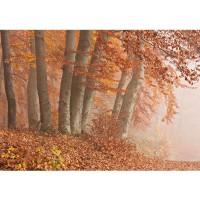 Fototapete Wald Tapete Wald Bäume Natur Baum Herbst Nebel braun | no. 255