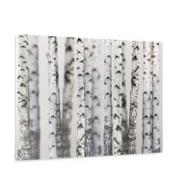 Leinwandbild Black an White Birch Trunks Birkenwald 3D Birke Stämme Wald | no. 44