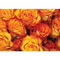 Fototapete Blumen Tapete Rose Blumen Blüte Liebe Rosen orange | no. 984