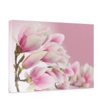Leinwandbild Pink Magnolia Magnolie Blumenranke Pflanzen Natur Orchidee Blume rosa | no. 14