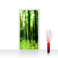 Türtapete - Sunlight Forest Wald Bäume Sonnenstrahlen grün Ruhe | no. 61