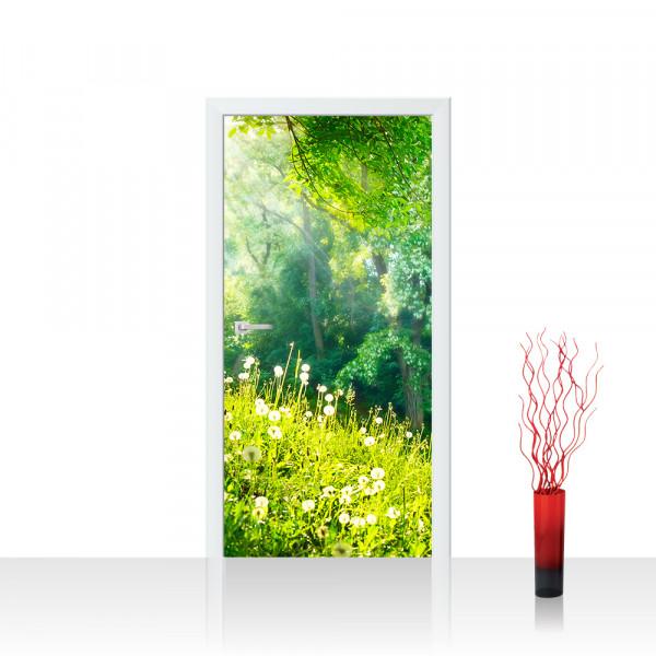 Türtapete - Sunny Forest Wald Bäume Natur Baum grün | no. 30