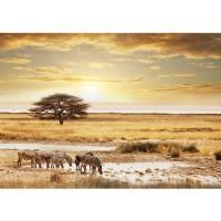 Fototapete Tiere Tapete Wüste Tiere Zebras Sonnenaufgang Natur beige | no. 236