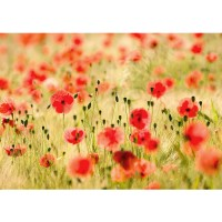 Fototapete Dream of Poppies Blumen Tapete Romantik Mohn Feld Blumen Gras grün | no. 70