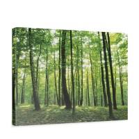 Leinwandbild Bäume Wald Sonne Wiese | no. 528
