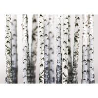 Fototapete Black an White Birch Trunks Wald Tapete Birkenwald 3D Perspektive Birke Stämme Wald grau | no. 44