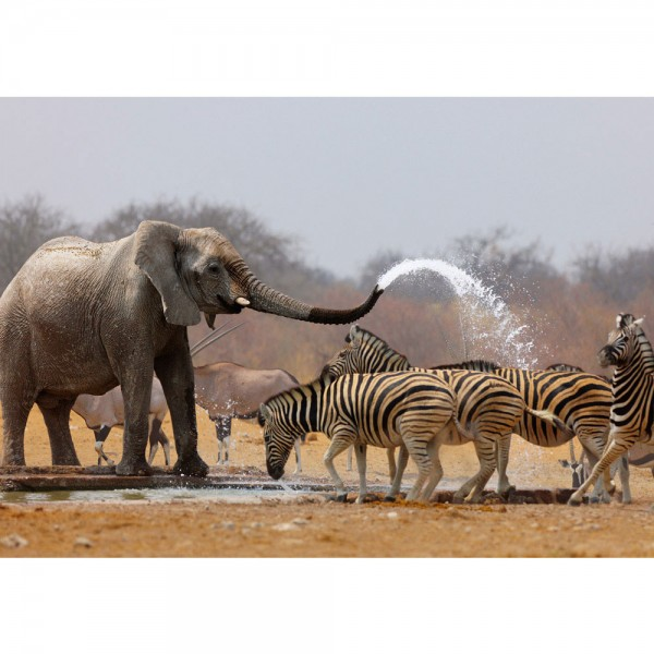 Fototapete Afrika Tapete Elefanten Zebra Wasser Giraffe Antilopen braun   no. 1294