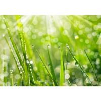 Fototapete Pflanzen Tapete Gras Halm Grün Wiese Sonne Natur grau | no. 199