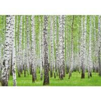 Fototapete Wald Tapete Birke Wald Bäume Natur grün weiß weiß | no. 433