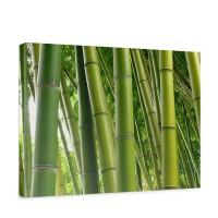 Leinwandbild Paradies of Bamboo Bambus Wald Bambuswald Dschungel Natur Bäume | no. 75