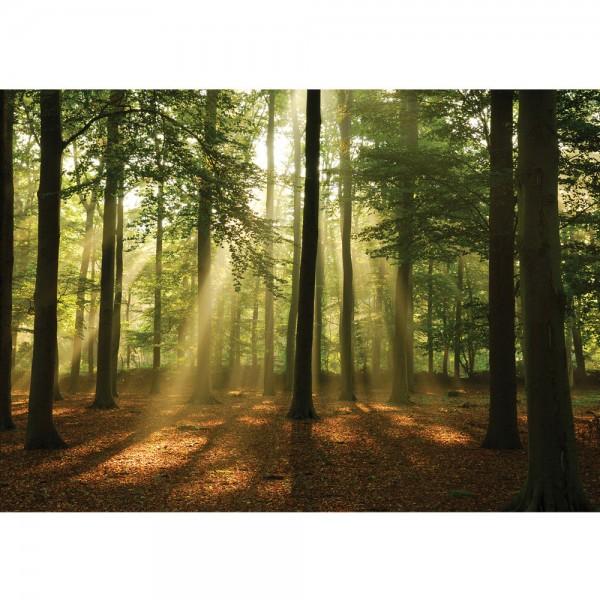 Fototapete Wald Tapete Laubbaum, Laubwald, Sonne, Sonnenstrahlen bunt   no. 3287