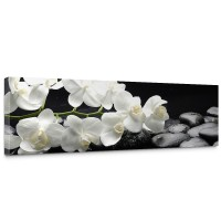 Leinwandbild White Orchids an Black Stones Orchidee Blumen Blumenranke Rosa Natur | no. 97